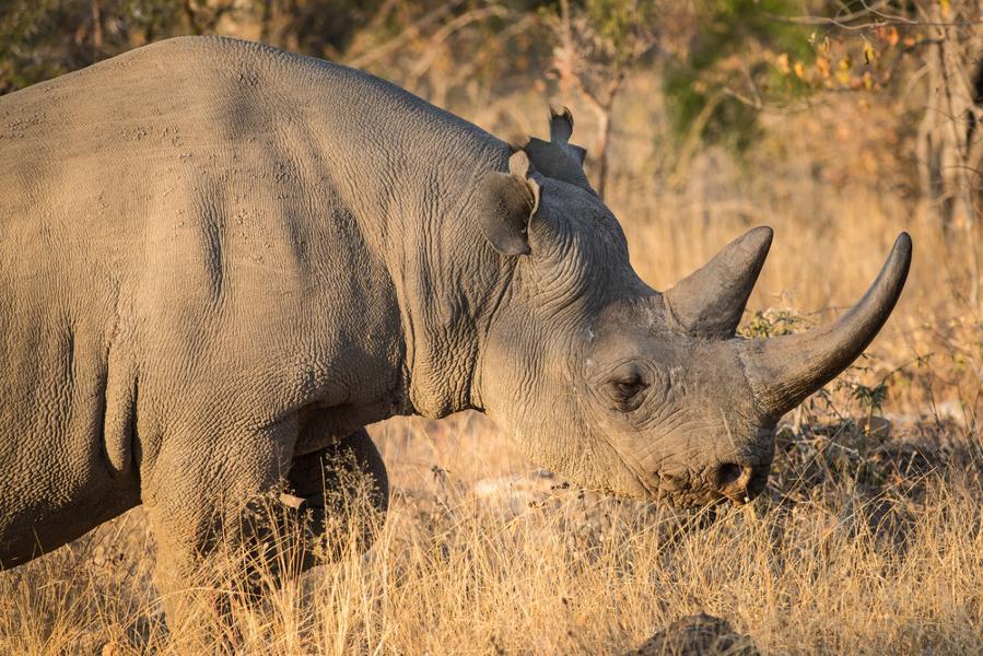 Les plus belles réserves privées près du parc Kruger en Afrique du Sud